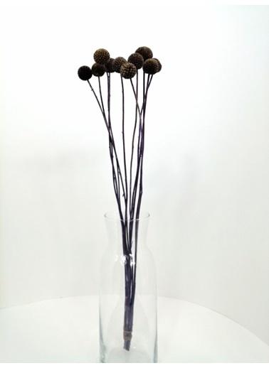 Kuru Çiçek Deposu Mor 10 Adet Crespedia Kuru Çiçek  Mor
